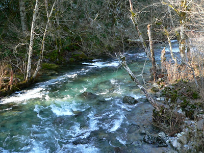 Steelhead Spawning Reach
